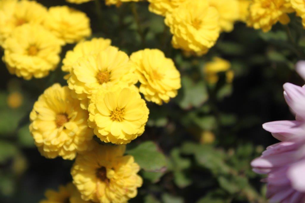 小坂団地文化祭と奥野地区社協収穫祭